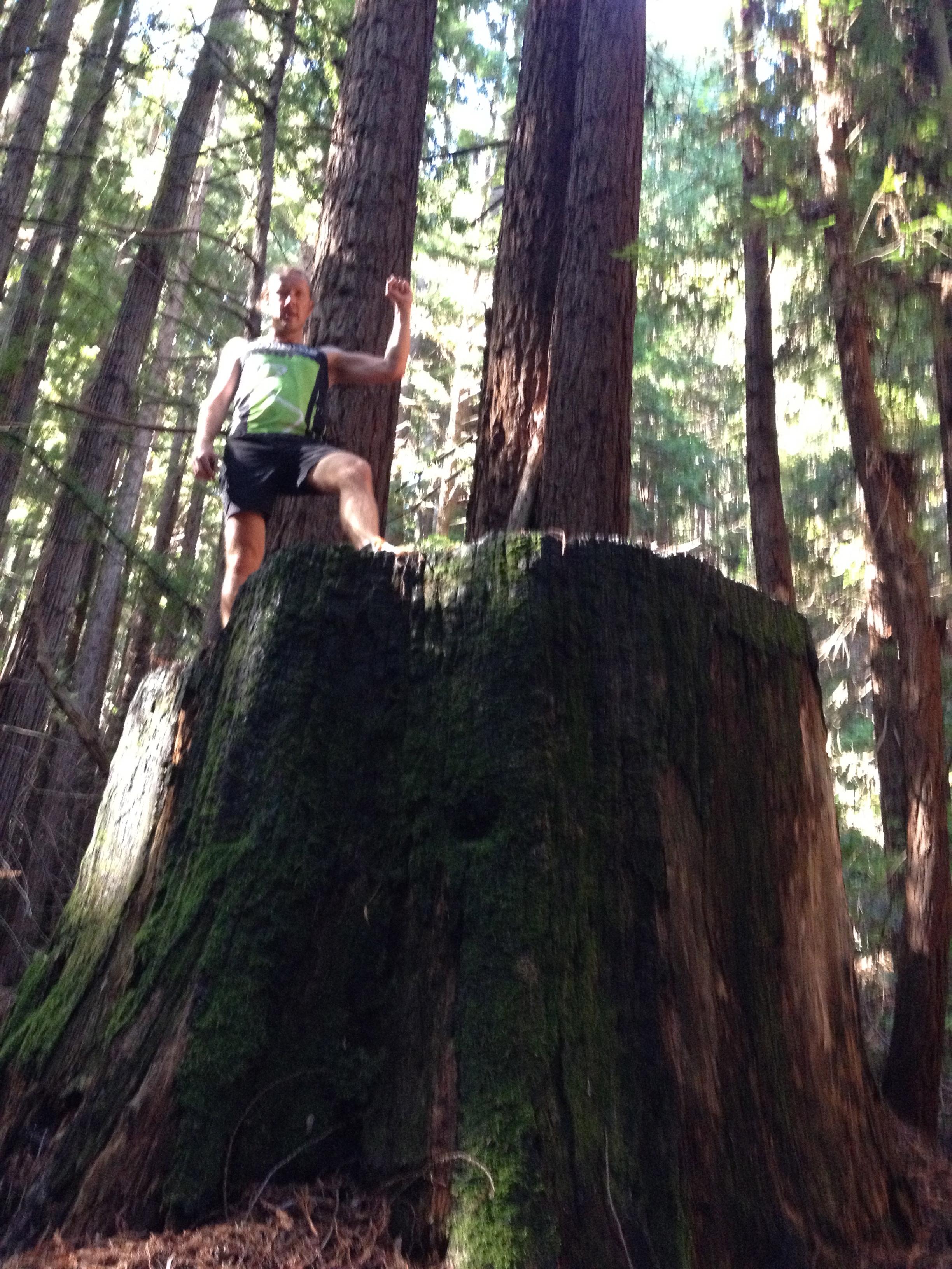 Amerikassa kaikki on suurempaa/ Redwoods, in America everything's bigger